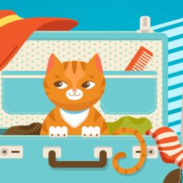 Cuida a tu gato y disfruta tus vacaciones