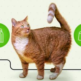 El comedero perfecto para tu gato