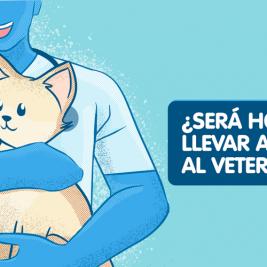 ¿será hora de llevar a mi gato al veterinario?