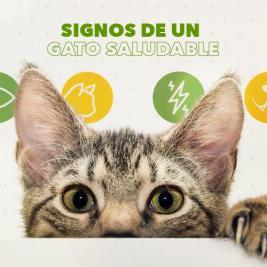signos de un gato saludable